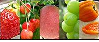山梨の美味しい果物を農園直送[逸品やまなし]