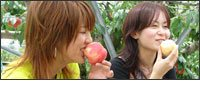 山梨で美味しい果物狩り[逸品やまなしの果物狩り]
